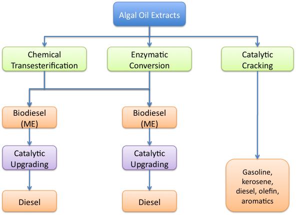 Algal2