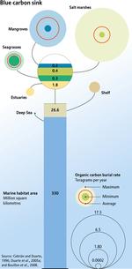 Blue-carbon-sink