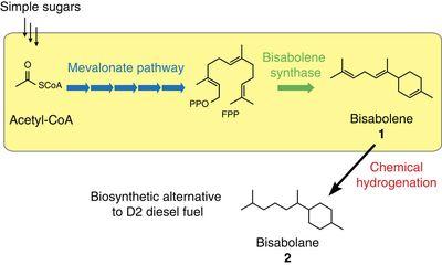 Bisabolene-ncomms1494-f1