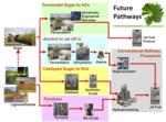 Futurebiojetpathways