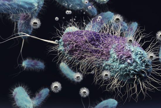 Soil-bacterium-cropped