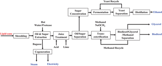 biodiesel from engineered sugarcane more economical than from soybean