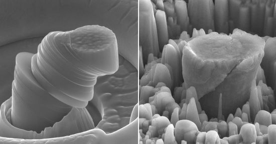 Magnesium+comparison_0c05ef44-03a5-44be-ad60-97d3ff88351e-prv