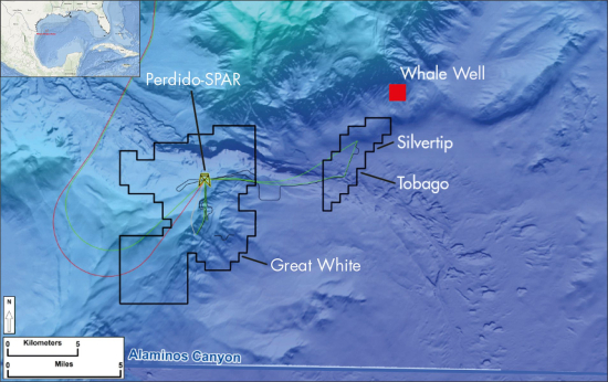Whale-map-gulf-of-mexico