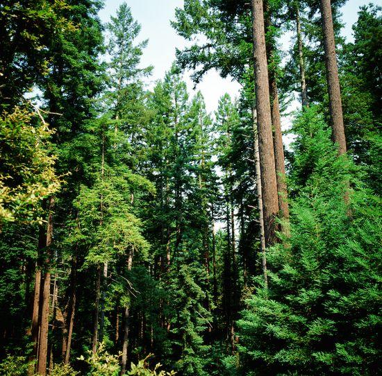 Garcia River Forest_(c)_Matt Gerhart_1